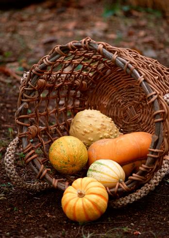ハロウィン「Pumpkin」:スマホ壁紙(15)