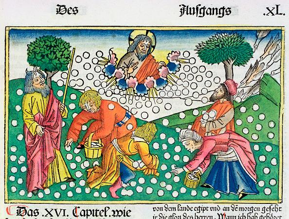 Israelite「Exodus 16:13-22: God Provides Quail And Manna To The Israelites」:写真・画像(16)[壁紙.com]