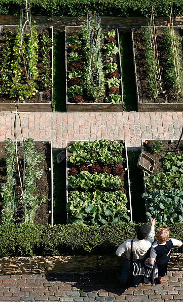 Community Garden「Spring Renaissance Celebration Brings Model Allotments」:写真・画像(2)[壁紙.com]