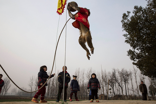 Chinese Culture「Chinese New Year Boosts Monkey Business for Villagers」:写真・画像(19)[壁紙.com]