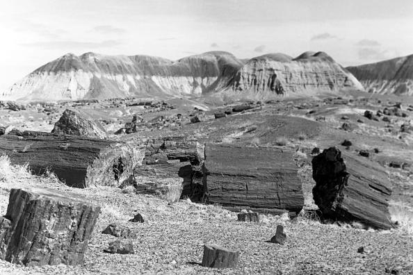 Wilderness Area「Journey Through Arizona」:写真・画像(0)[壁紙.com]