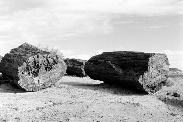 Wilderness Area「Petrifed Forest National Park, Arizona」:写真・画像(8)[壁紙.com]