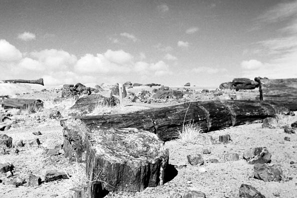 Wilderness Area「Petrifed Forest National Park, Arizona」:写真・画像(4)[壁紙.com]