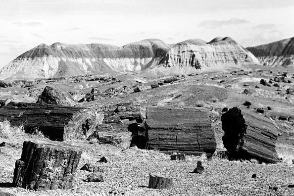 Wilderness Area「Journey Through Arizona」:写真・画像(5)[壁紙.com]