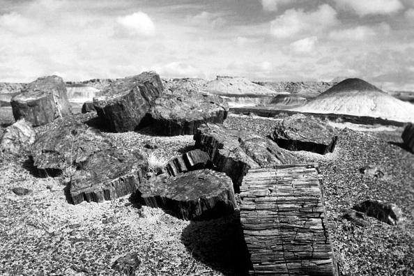Wilderness Area「Petrifed Forest National Park, Arizona」:写真・画像(3)[壁紙.com]