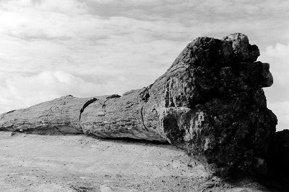 Wilderness Area「Petrifed Forest National Park, Arizona」:写真・画像(2)[壁紙.com]