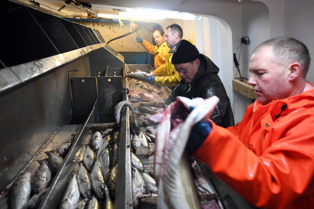 Trawler Fishing Off The Coast Of Shetland:ニュース(壁紙.com)