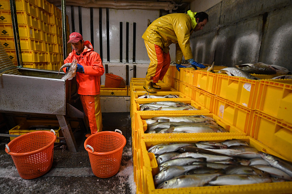 Fisherman「Trawler Fishing Off The Coast Of Shetland」:写真・画像(4)[壁紙.com]