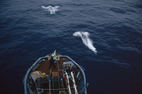 Whale「Japanese Whaling」:写真・画像(5)[壁紙.com]