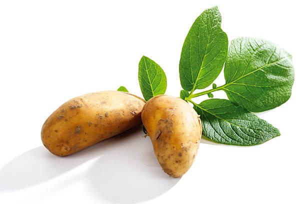 Patatoes with leaves:スマホ壁紙(壁紙.com)