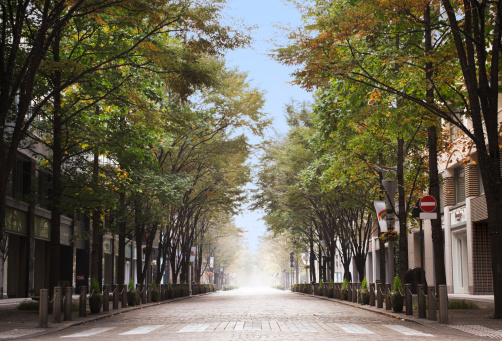 City Life「The avenue in Tokyo」:スマホ壁紙(17)