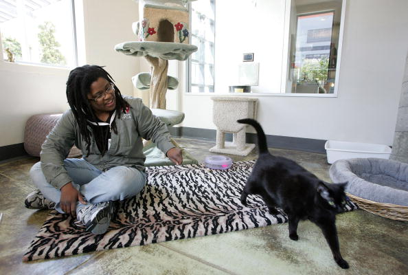 Apartment「San Francisco Named Most Humane City For Animals In U.S」:写真・画像(6)[壁紙.com]
