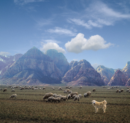 草食性「Sheep grazing near mountains with sheep dog (Digital composite)」:スマホ壁紙(9)
