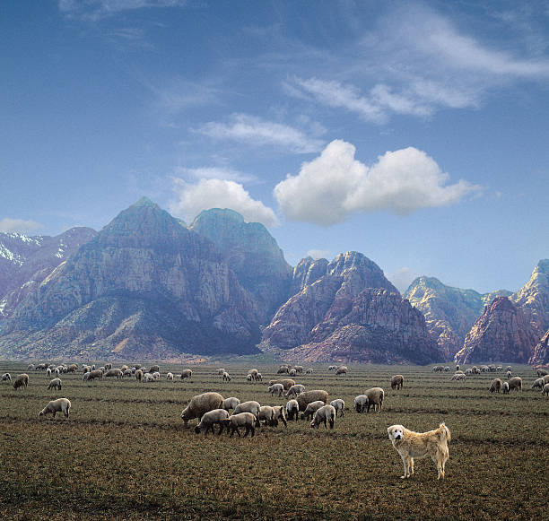 Sheep grazing near mountains with sheep dog (Digital composite):スマホ壁紙(壁紙.com)