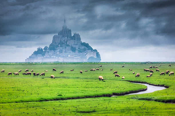 Sheep grazing in front of Mont Saint Michel, Normandy, France:スマホ壁紙(壁紙.com)
