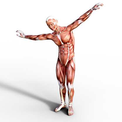Muscle「3D render depicting the anatomy of a human muscular system.」:スマホ壁紙(7)