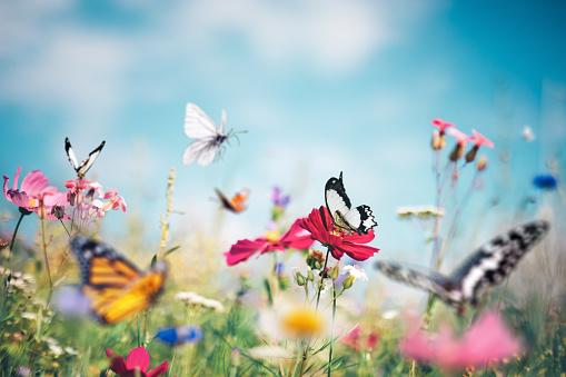 Flower Head「Butterfly Meadow」:スマホ壁紙(10)
