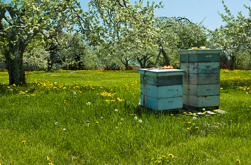 Grove「Bee hives surrounded by trees on a sunny day」:スマホ壁紙(1)