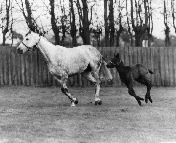 Horse「Racehorse And Colt」:写真・画像(4)[壁紙.com]