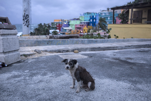 2017 Hurricane Maria「Puerto Rico Prepares For Direct Hit From Hurricane Maria」:写真・画像(12)[壁紙.com]