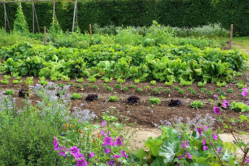 Bush Bean「Big vegetable garden」:スマホ壁紙(8)