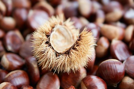 栗「Shelled Sweet Chestnuts with Shell」:スマホ壁紙(5)