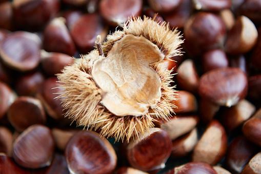 栗「Shelled Sweet Chestnuts and Shell」:スマホ壁紙(7)