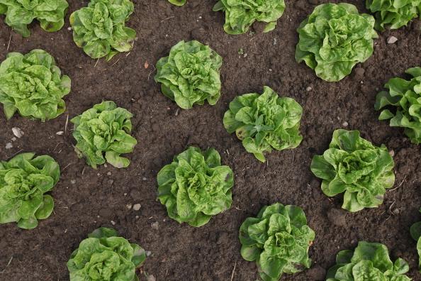 飲食「Organic Farmers Profit From EHEC Outbreak」:写真・画像(16)[壁紙.com]