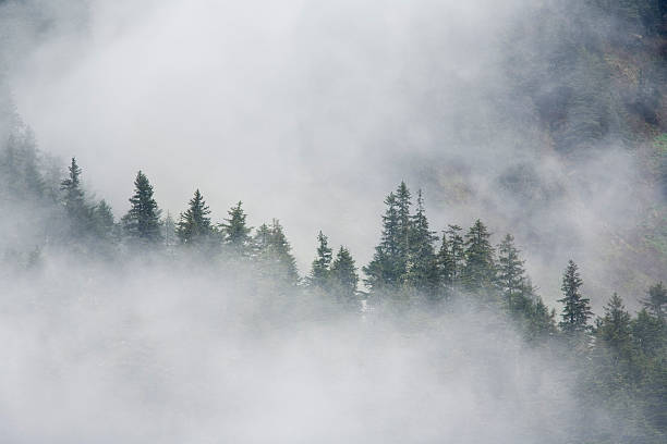 Fog Rises Among The Trees On Fox Island. Kenai Fjords. Summer Kenai Peninsula Alaska.:スマホ壁紙(壁紙.com)