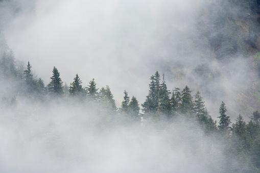 Fog「Fog Rises Among The Trees On Fox Island. Kenai Fjords. Summer Kenai Peninsula Alaska.」:スマホ壁紙(4)