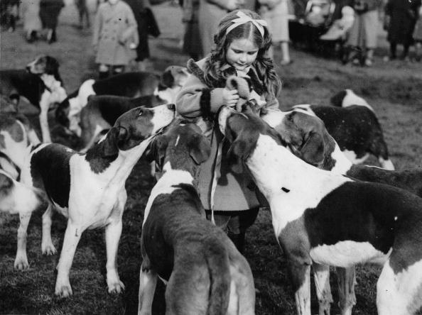 動物「A little girl surrounded by hounds. Photograph. Around 1935.」:写真・画像(7)[壁紙.com]