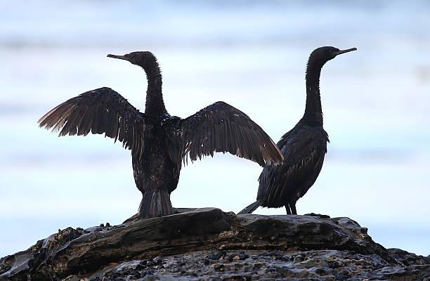 California Declares State Of Emergency As Oil Spill Harms Pristine Coastline:ニュース(壁紙.com)