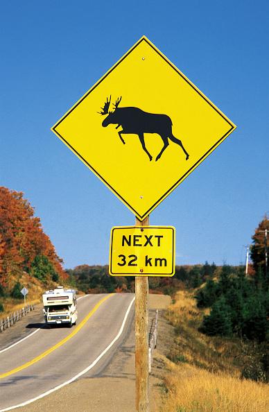 Red Deer - Animal「Motorhome at highway - signboard warning of moose - lake Superior province park - province of Ontario - Canada」:写真・画像(19)[壁紙.com]