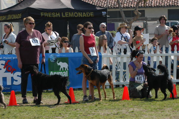 """Stephen Shugerman「4th Annual """"Nuts For Mutts""""」:写真・画像(17)[壁紙.com]"""