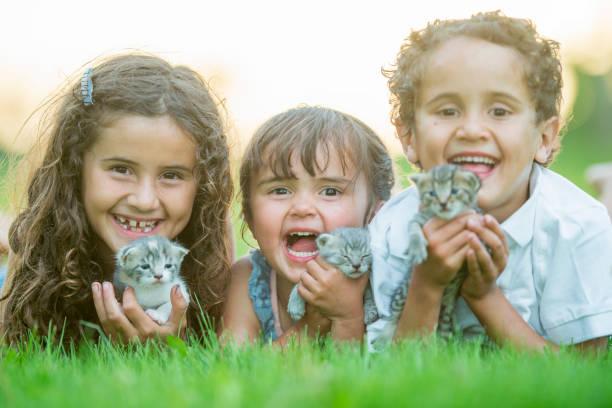 誰もが愛する子猫:スマホ壁紙(壁紙.com)