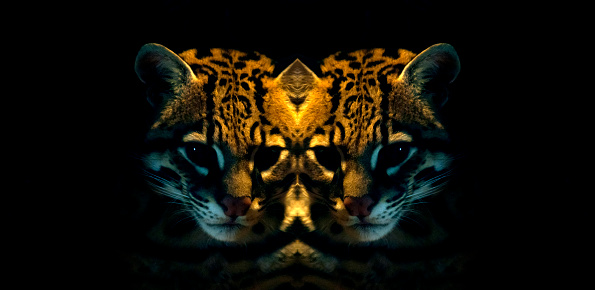 Multiple Exposure「Ocelot Mirror Image」:スマホ壁紙(7)