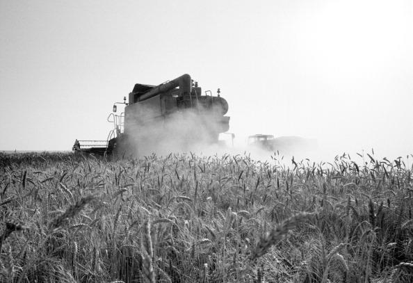 Dust「European Agriculture」:写真・画像(11)[壁紙.com]
