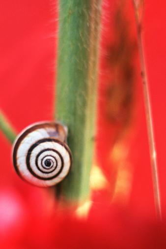 snails「Snail on stem」:スマホ壁紙(13)