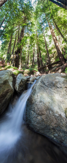 Big Sur「Redwood Forest and Stream」:スマホ壁紙(6)