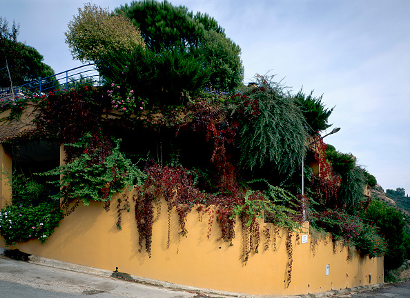 Lush Foliage「Partial view of a building adorned with plants」:写真・画像(9)[壁紙.com]