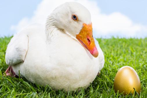 金運「グレーグースにゴールドの卵」:スマホ壁紙(15)