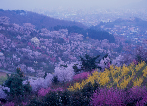 Hanami「Dawn of Mount Hanami, Fukushima, Fukushima, Japan」:スマホ壁紙(7)