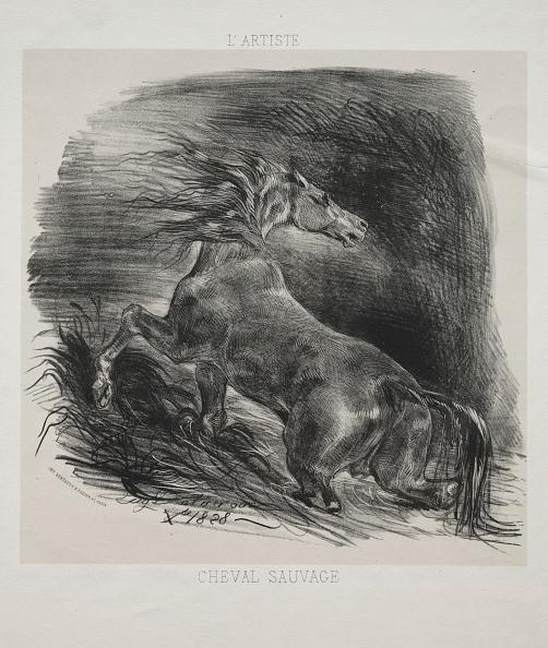 Animal Wildlife「The Wild Horse」:写真・画像(17)[壁紙.com]