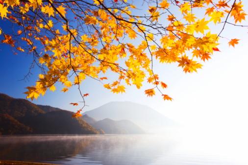 Japanese Maple「Lake Chuzenji, Nikko city, Tochigi Prefecture, Honshu, Japan」:スマホ壁紙(4)