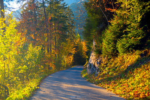 Switzerland「Point of view driving on a Swiss Alp winding Road in Autumn at border of Fribourg and Bern Cantons」:スマホ壁紙(14)