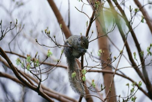 Gray Squirrel「Squirrel in tree」:スマホ壁紙(16)