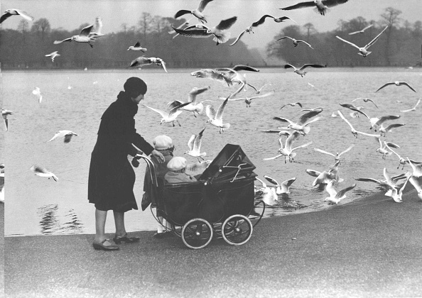 Baby Carriage「Feed The Birds」:写真・画像(19)[壁紙.com]
