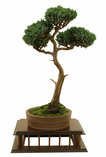 Juniper Tree「Juniper Bonsai on White」:スマホ壁紙(14)