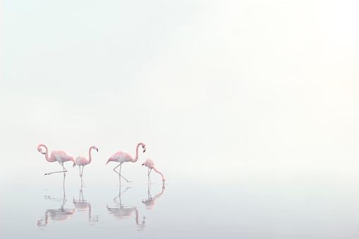 Three Quarter Length「Flamingos wading in foggy water」:スマホ壁紙(15)