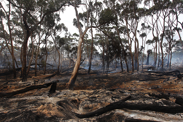 Kangaroo Island「Kangaroo Island Bushfire Threat Increases As Residents Are Told To Evacuate」:写真・画像(0)[壁紙.com]